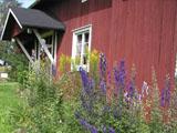 Kotiseutumuseon kukkapenkki